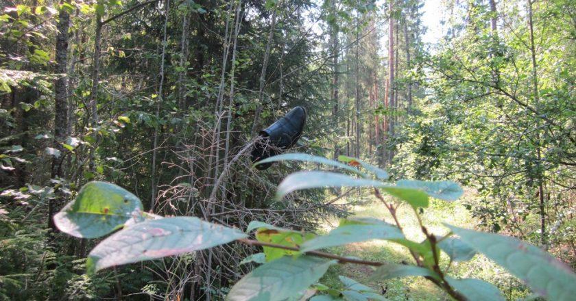В Омутнинском лесу с