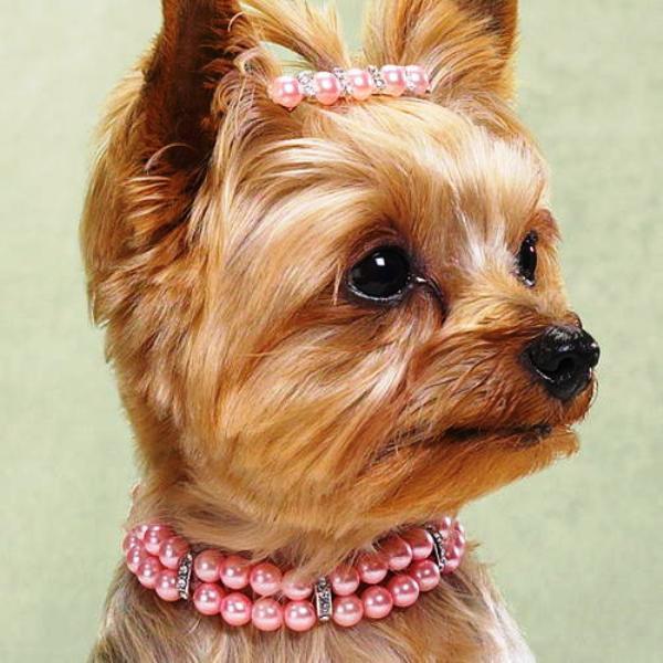 товары картинки собак с украшениями некоторых них сняты