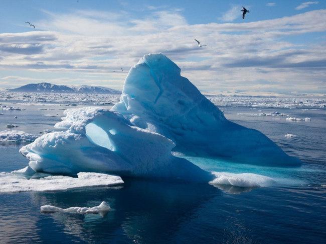 Ученые: глобальное потепление уничтожит 97% обитателей Арктики