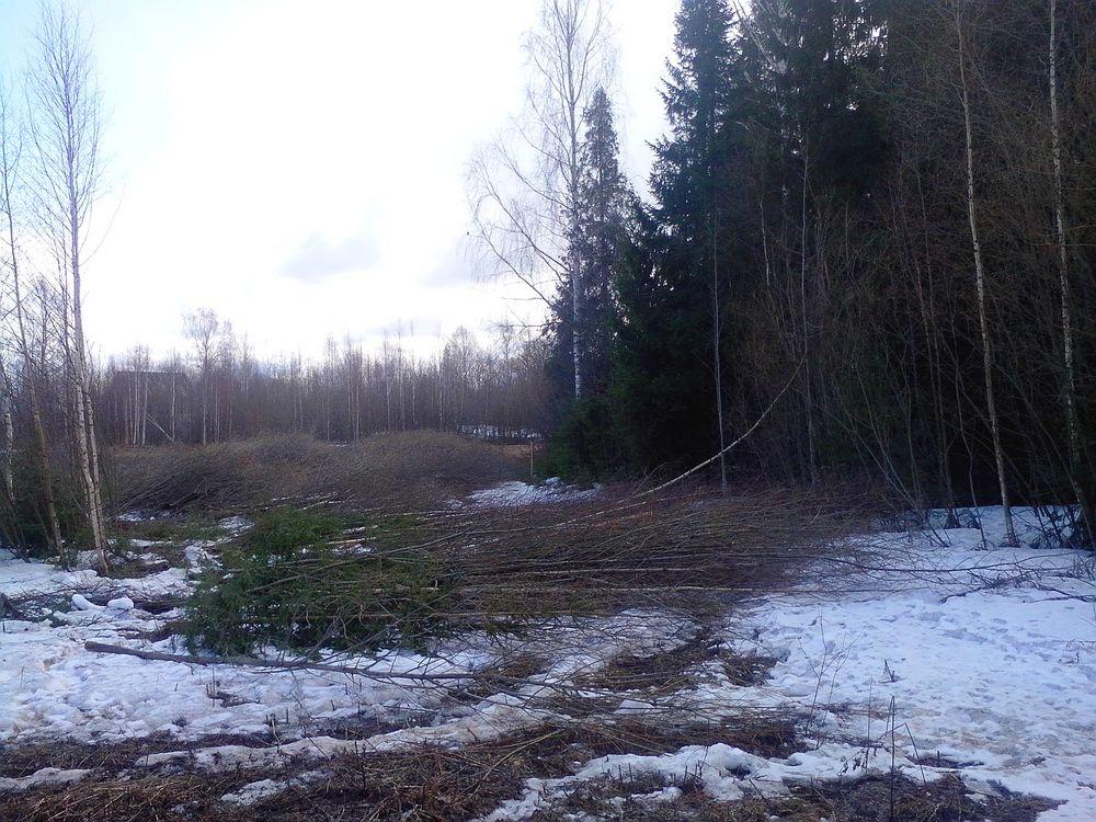 В Кирове вырубают лес