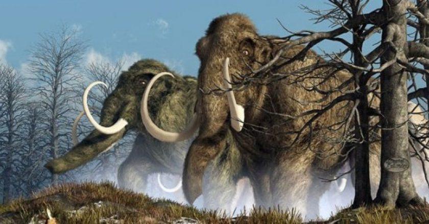 Неизвестный науке вирус мог стать причиной вымирания мамонтов