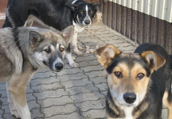 собаки в Омутнинске Кировской области