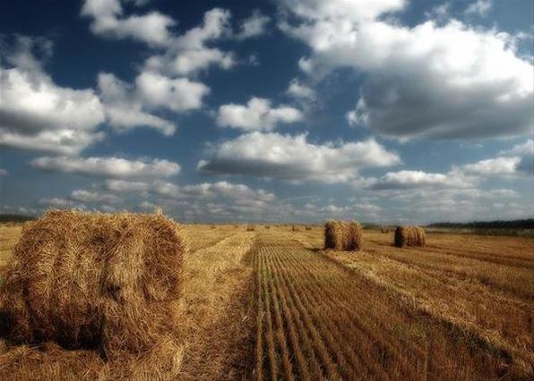 Кировские аграрии готовятся принять участие в ежегодном окружном Дне поля