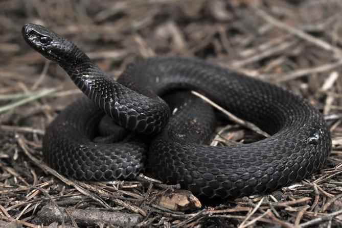 От укуса змеи пострадал подросток из Омутнинска Кировской области