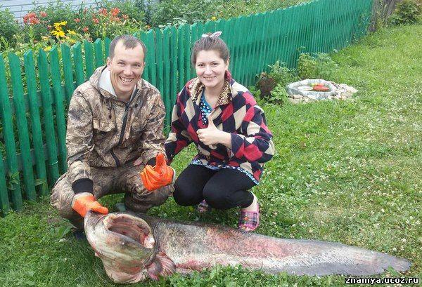 Рыбак из Кировской области поймал в Вятке двухметрового сома