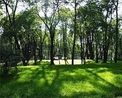 Кировчанам запретили покупать ягоды и грибы из Нововятского района в Кирове