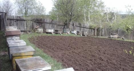Жители Слободского Кировской области и их домашние животные страдали от пчел