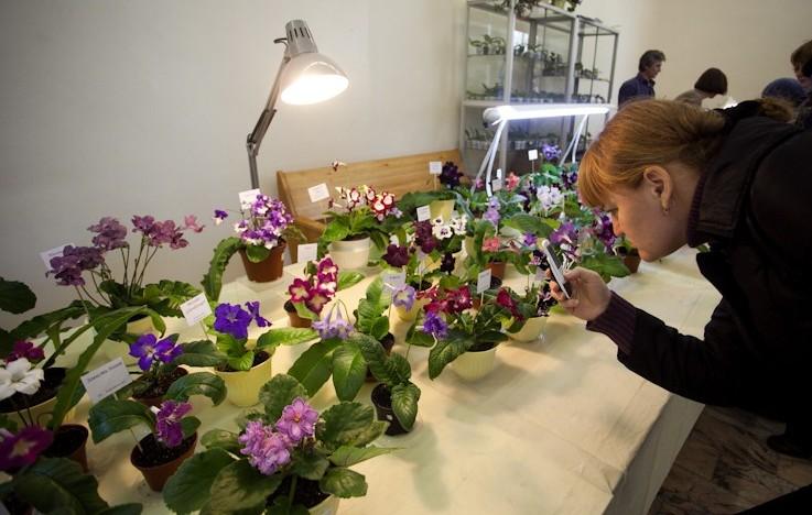 В Кирове пройдет благотворительная ярмарка цветов
