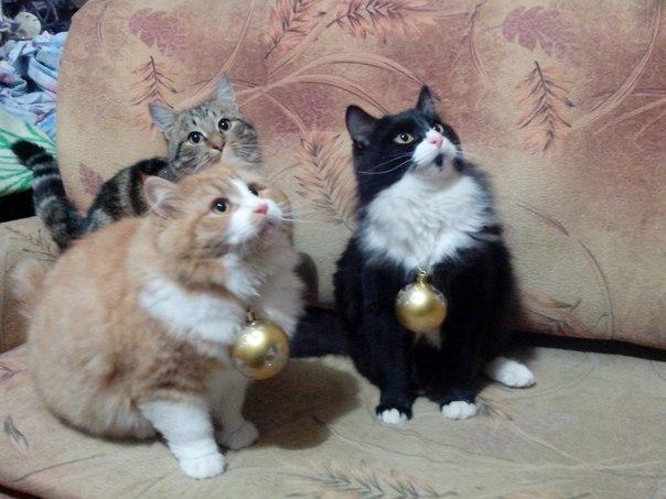 Ученые выяснили, почему кошки равнодушны к людям