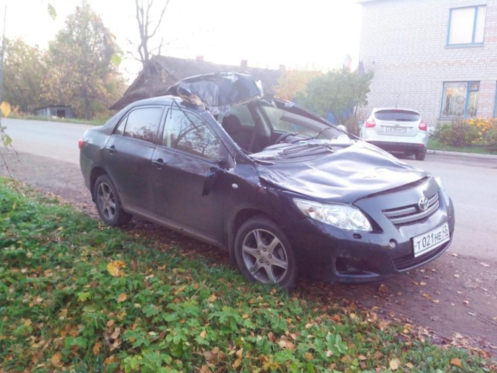 В Кировской области лось выскочил на дорогу и налетел на иномарку