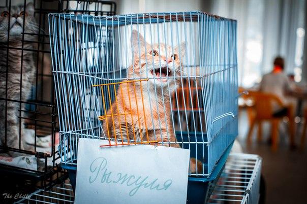 В Кирове 4 октября пройдет выставка бездомных кошек
