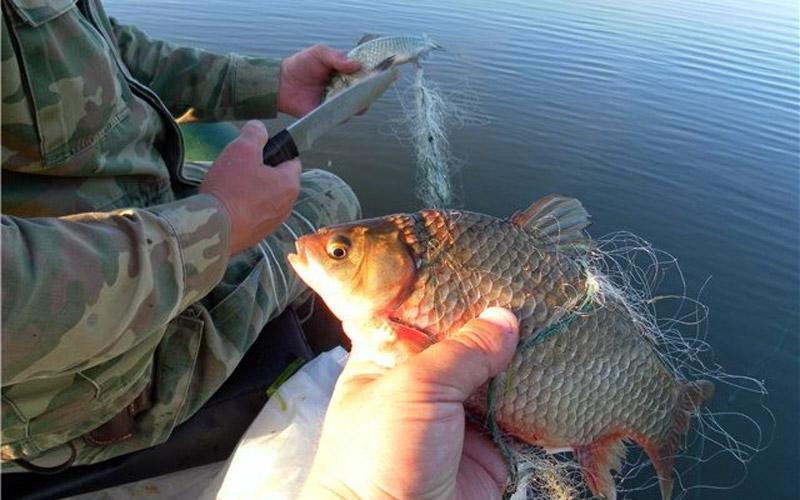 В Кирове двоих сотрудников ГИБДД поймали за браконьерством