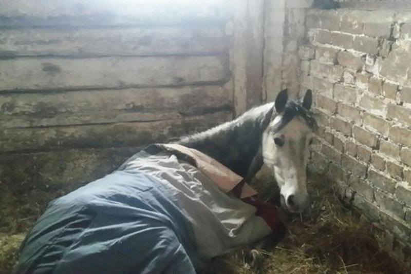 Кировчан просят помочь спасенным лошадям