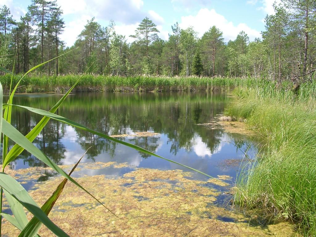 В Кировской области стало на один памятник природы больше