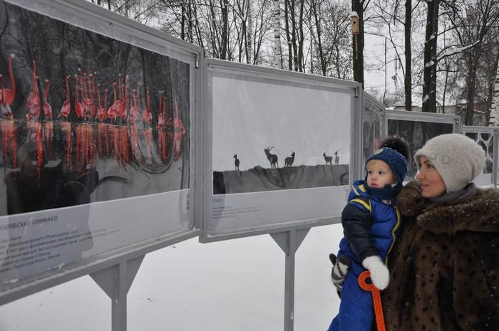 В Кирове открылась выставка фотографий дикой природы