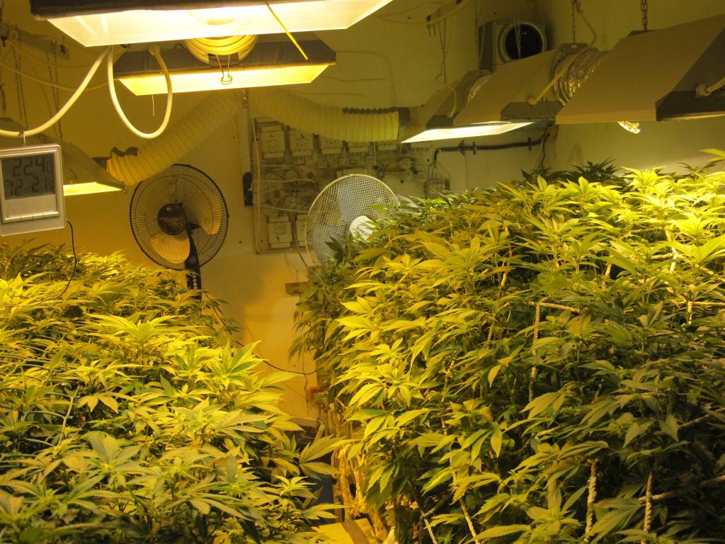 Купить оборудование для выращивания конопли где купить марихуану в калуге