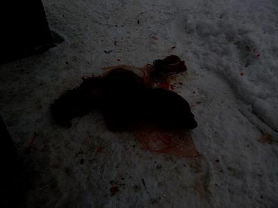 На жителя Омутнинска возбудили уголовное дело за убийство собаки