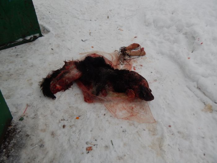 В Омутнинске нашли пакет с расчлененной собакой