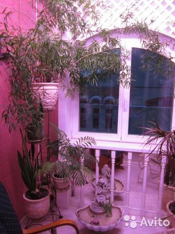 Самая дорогая квартира февраля в Кирове - пятикомнатная с пятью лоджиями