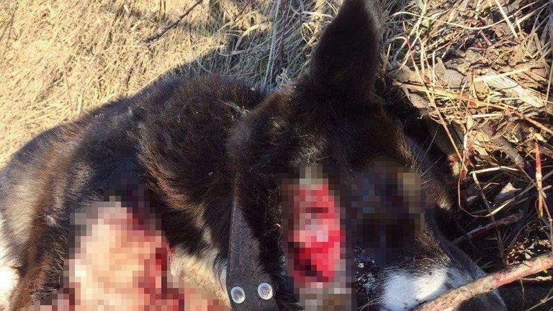 5 тысяч граждан требуют наказать убийцу собаки в Субботихе