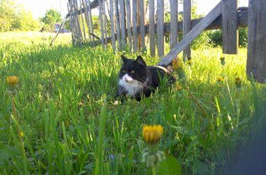 ЛЕто кот юлия ионушайте