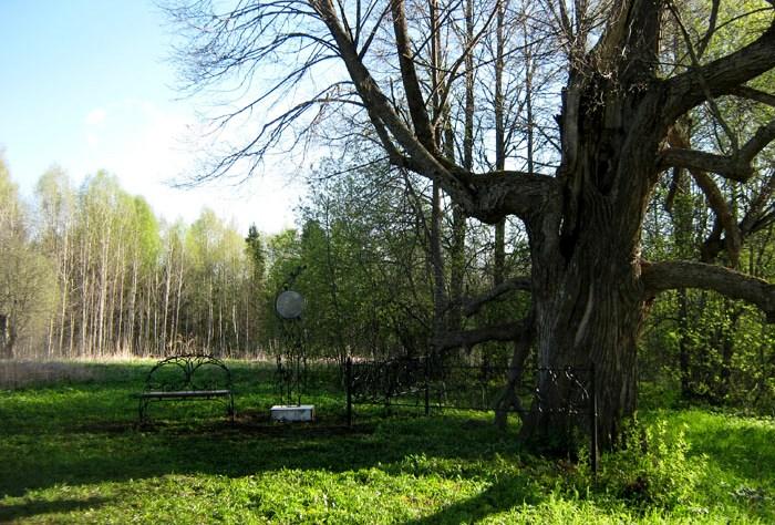 Кировская липа стала памятником живой природы России Ежегодно его посещают около шести тысяч туристов