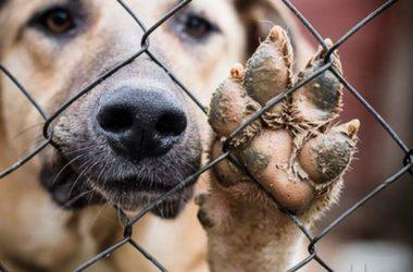 В Кирове подрядчик по отлову собак сорвал встречу с журналистами