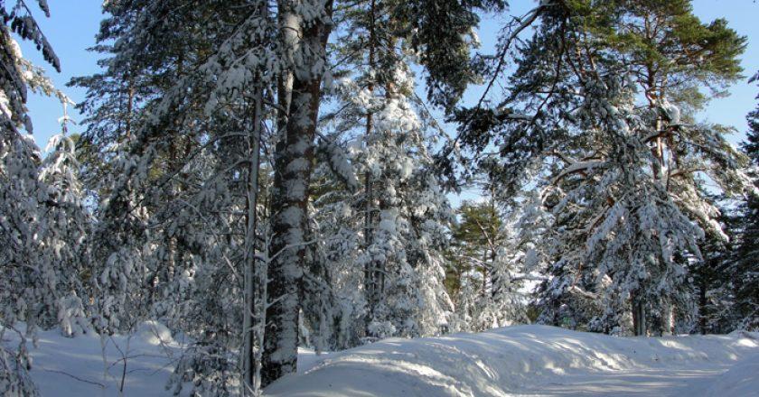 Новости в Кировской области 20 февраля – Новый вариант.