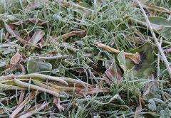Метеопредупреждение: в Кировской области ожидаются заморозки