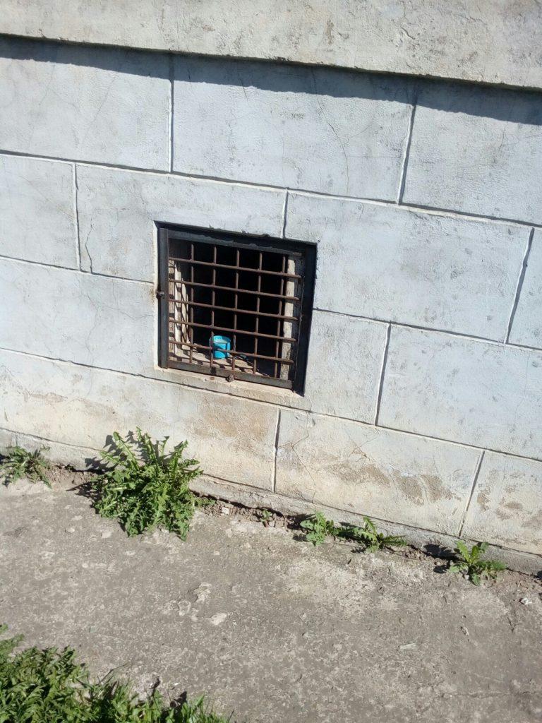 В Нововятске в подвале дома коммунальщики заживо замуровали кошек