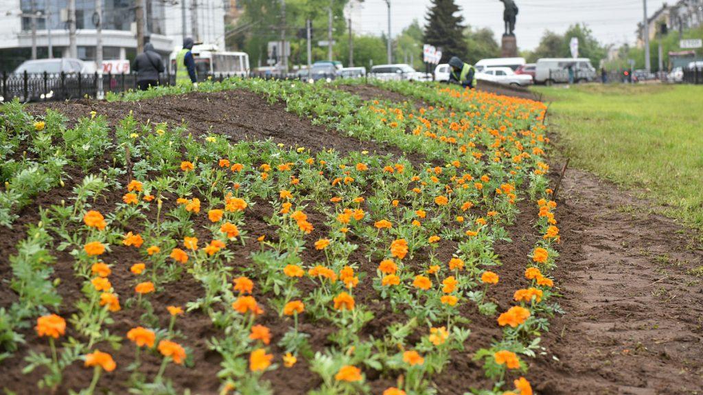 К Дню города в Кирове высадят более 150 тысяч цветов