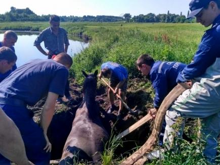 Под Кирово-Чепецком сотрудники МЧС спасли упавшую в канаву лошадь