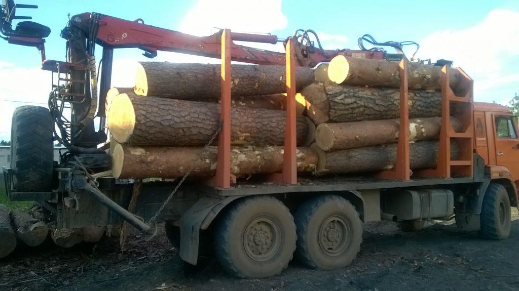 В Советском районе чёрные лесорубы вырубили 9 столетних сосен
