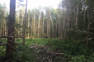 В Малмыжском районе лесоруба убило упавшей березой