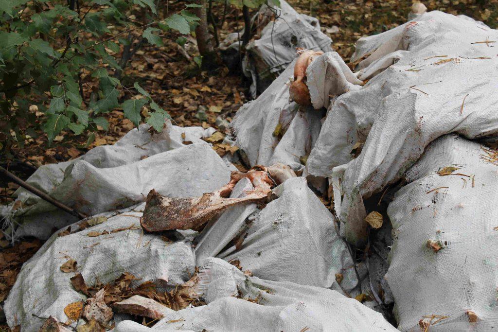 В пригороде Кирова обнаружили две новые свалки с останками животных