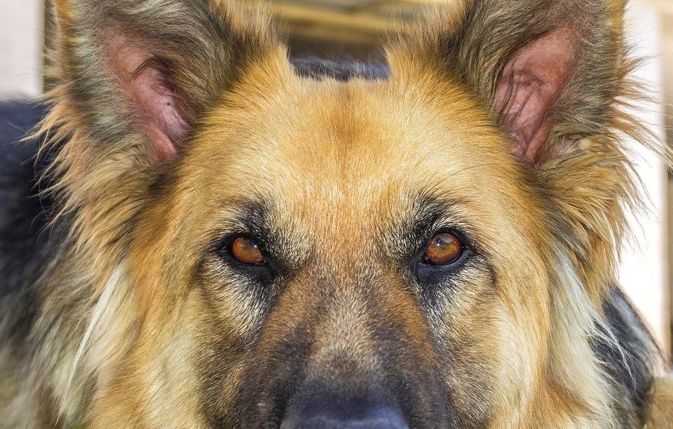 В Кирове проводится проверка по публикации СМИ по факту нападения собаки на двух детей