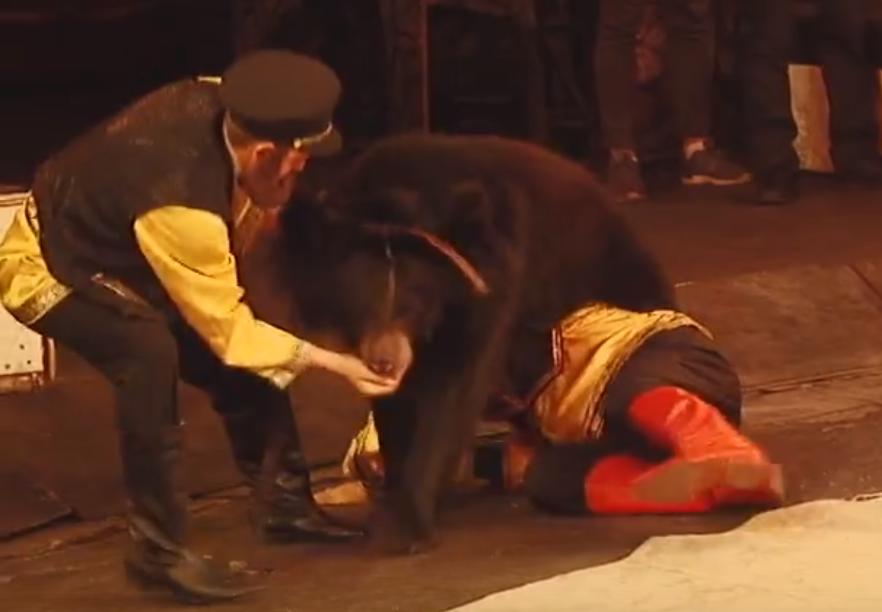 В Кирове медведица напала на дрессировщика во время выступления