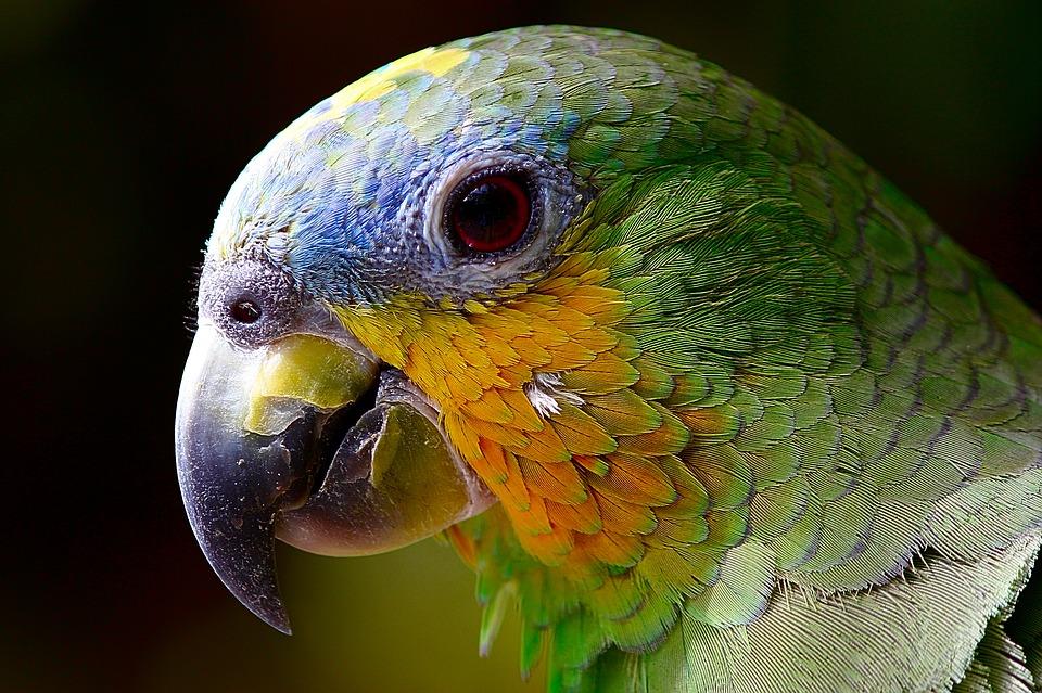 Грабитель с пистолетом украл у мужчины клетку с попугаем