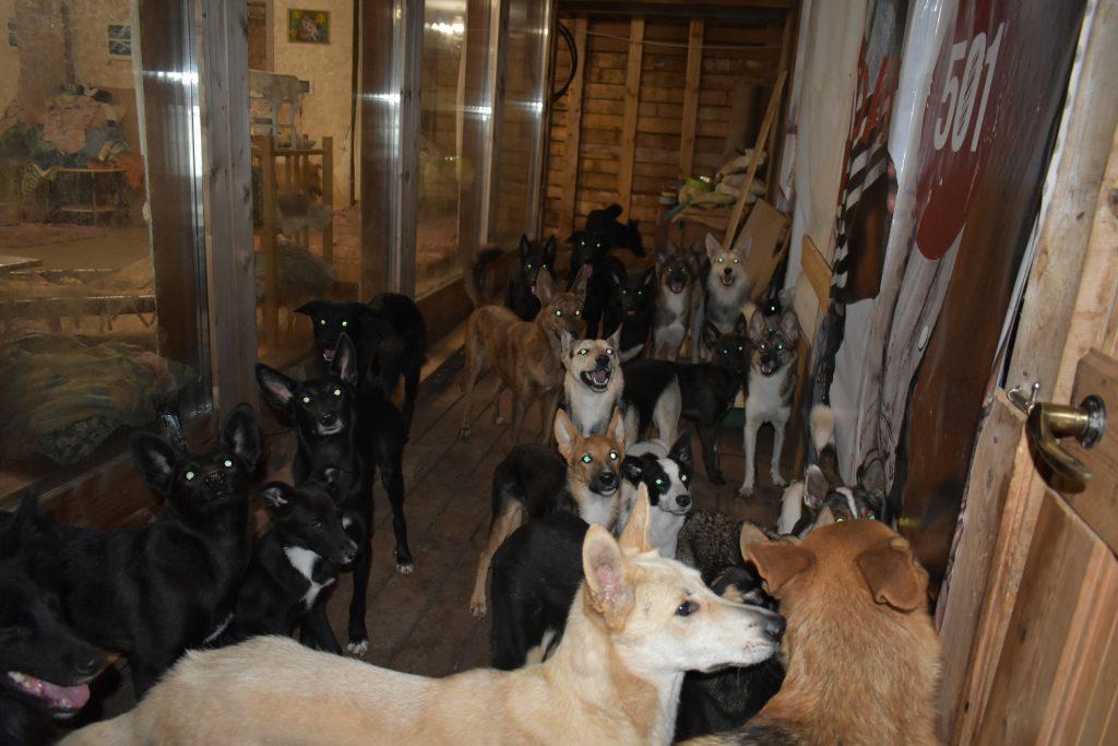 В Кирове девушка держит дома более 50 собак