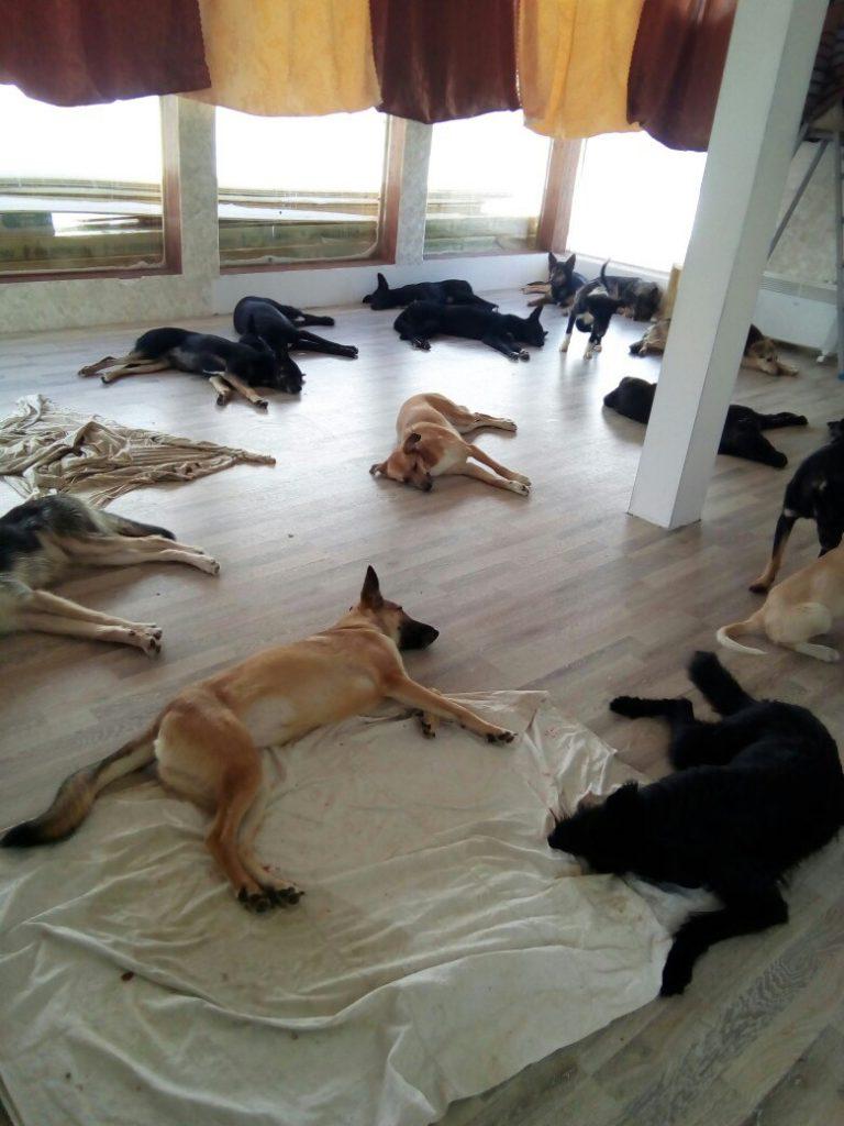 В Кирове девушка держит 50 собак и шесть кошек
