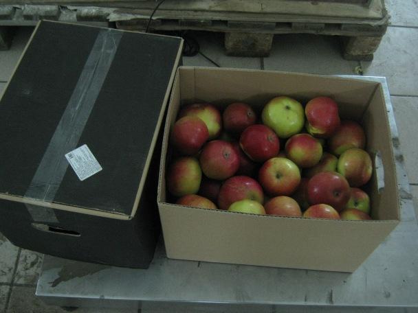В Кирове раздавили очередную тонну санкционных яблок, груш и капусты