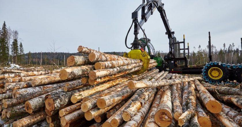 Лесной комплекс обеспечил бюджету 2,5 млрд рублей в 2018 году
