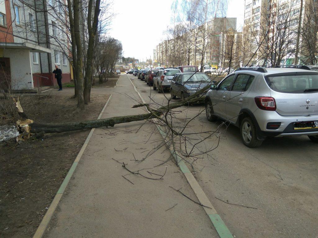 В Кирове дерево упало на автомобиль