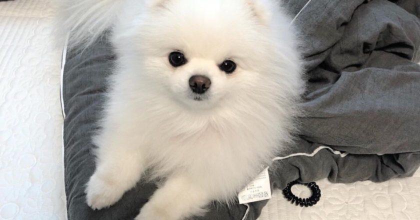 Кирове сознательный вор вернул ребенку украденную собаку