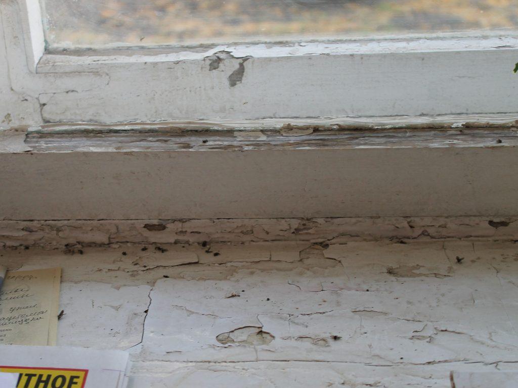 Из-за бездействия управляющей компании многоэтажку на Упита в Кирове атаковали мухи и черви.