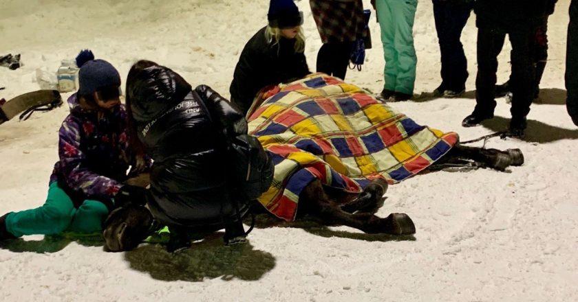 На Театральной площади три часа умирала лошадь