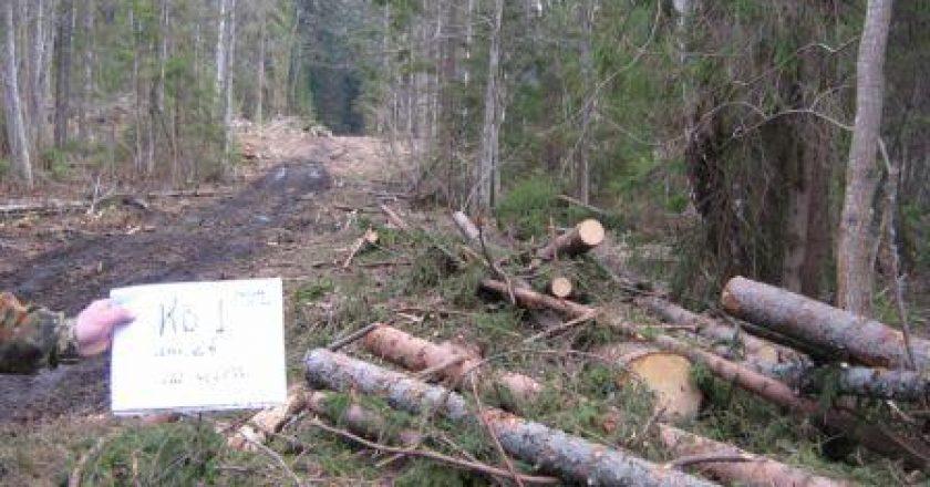 В Кировской области незаконно нарубили лес на 2 млн рублей