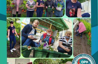 В Кировской области волонтёры высадят цветы