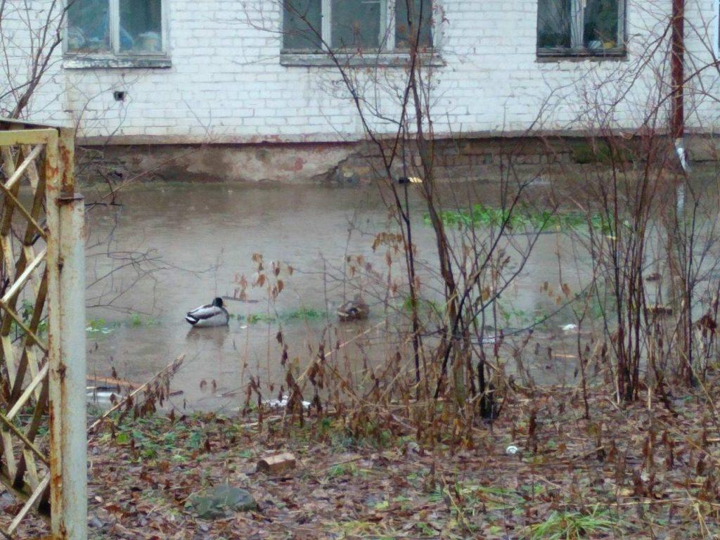 Кировчане неоднократно обращались к городским властям с просьбой решить их проблему. Но в администрации отвечали, что сети находятся на придомовой территории и обслуживать их должны сами жильцы.