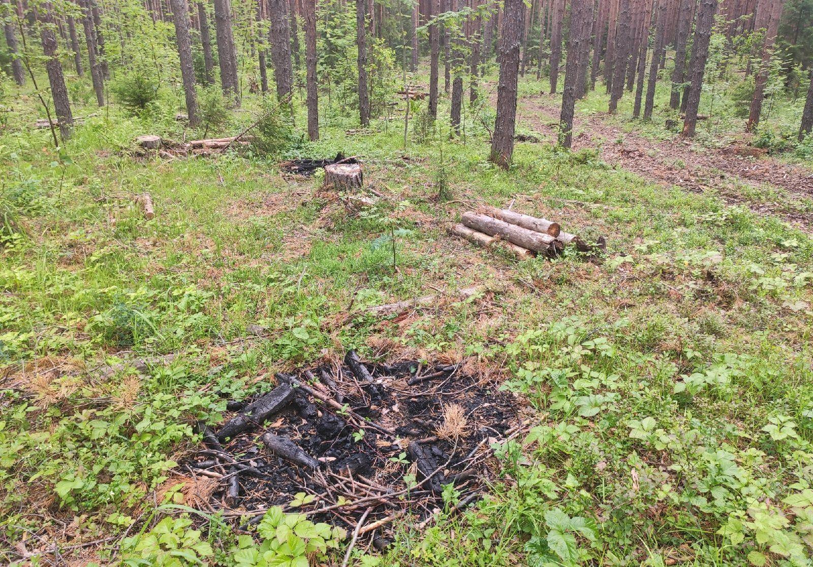 Неизвестные вырубают лес возле Бобино